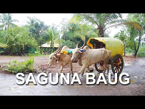 A Sunday drive to Saguna baug | Travelling India