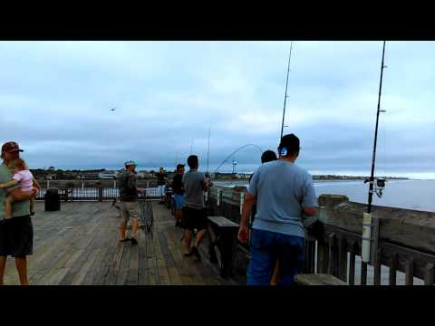 Folly Pier Fishing: Red Drum