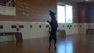 *adopted* Monty 6253071 Humane Society Colorado Adopt