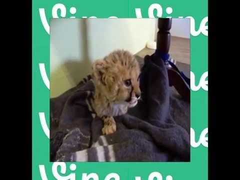 Compilation of the best cat's vine video part 2