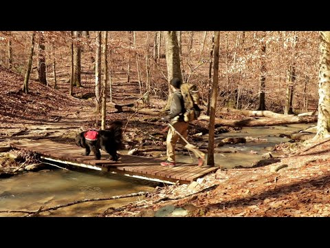 Hiking with Newfoundland dog by a Creek   No Talking   Nature Sounds   Hammocking