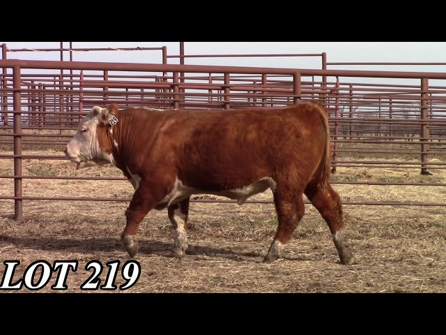 Mead Angus Farms Lot 219