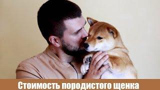 Сколько стоит породистый щенок? Сколько обходится собака в месяц?