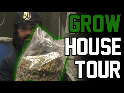 Touring one of Nevada's biggest grow houses (generating millions of $$$ a month!!!)