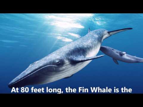 Long Beach Whale-Watching