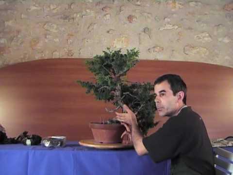 ABV 2007 demo  Gabriel Romero   Juniperus