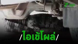 จระเข้โผล่แตกตื่นทั้งชุมชน   20-09-62   ข่าวเที่ยงไทยรัฐ