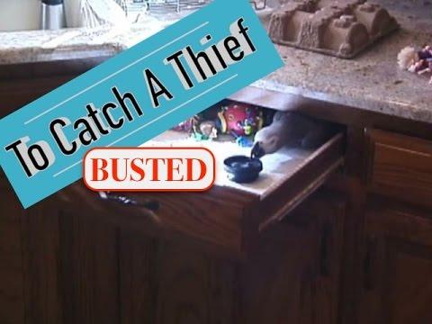 To Catch A Thief By Einstein Parrot