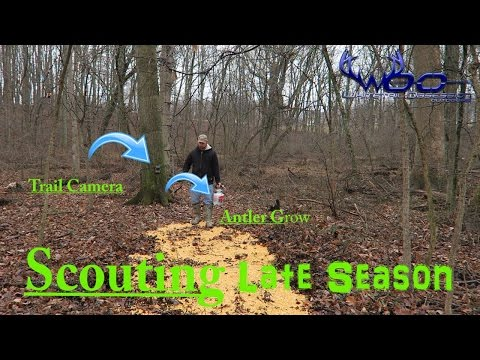 HOW TO ATTRACT DEER TO YOUR PROPERTY | ANTLER GROW CORN AND SPYPOINT TRAIL CAMERAS