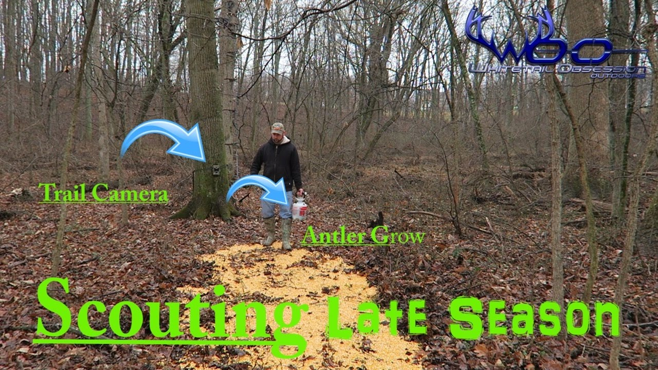 Forum on this topic: 3 Ways to Attract Deer, 3-ways-to-attract-deer/