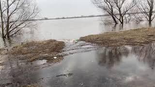 Разлив Оки 7 апреля 2021