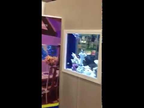 87 Ide Aquarium Design Youtube HD Paling Keren Untuk Di Contoh