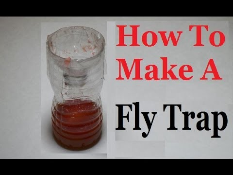 catch hundreds of house flies in days with a homemade trap funnydog tv. Black Bedroom Furniture Sets. Home Design Ideas
