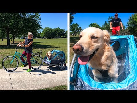 PUPPY BIKE TRAILER ADVENTURE!