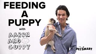 PetSmart Puppy Training: Feeding a Puppy