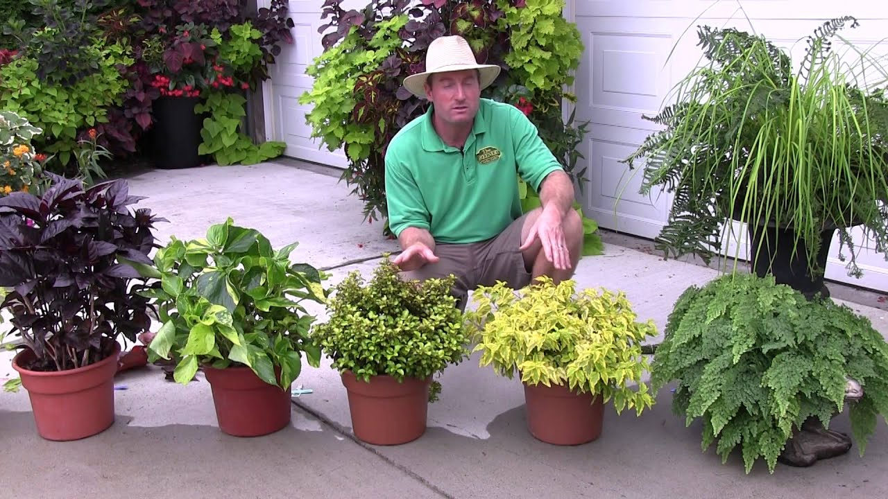 Foliage Plants Part 1 Youtube