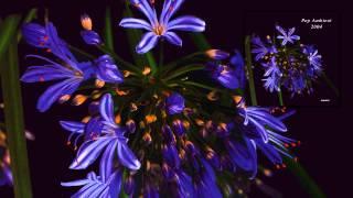 Donnacha Costello - To Thee This Night (I Will No Requiem Raise) 'Pop Ambient 2004' Album
