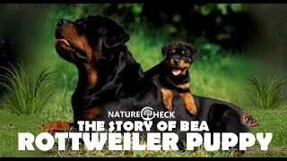Rottweiler Puppy Bea - Video Diary