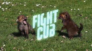 Fight Cub, from Dissolve