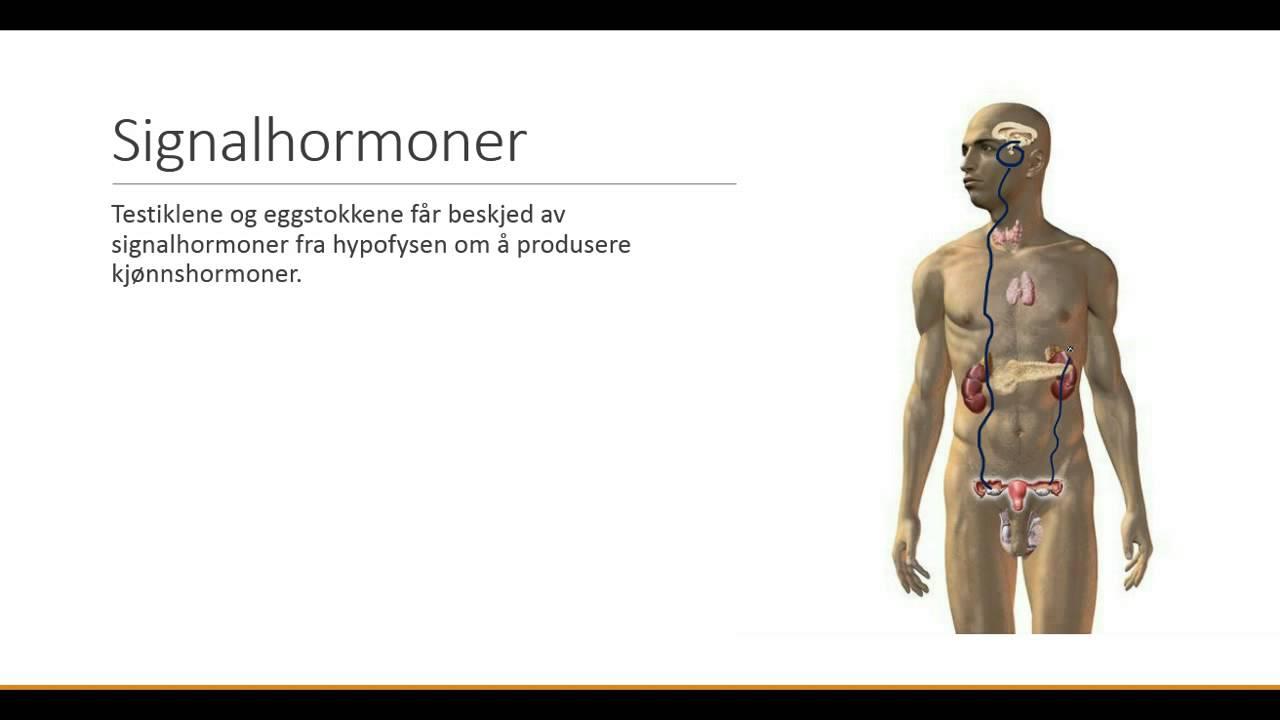 Hvordan kroppen regulerer hormonproduksjonen