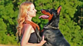 SEVERAL Dog owners have SEX WITH THEIR DOG.