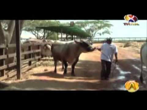 Agrovisión: Raza Carora 1ra Parte
