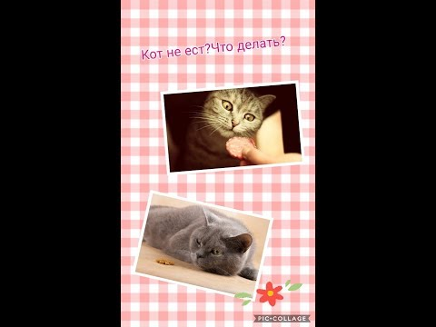 Вопрос: Почему кот ест как всегда, а заметно худеет Худеют ли коты в старости?