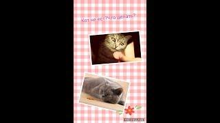 Причины почему кот плохо ест,худеет?
