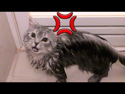 我が家の猫様初めてのお風呂でブチギレ。
