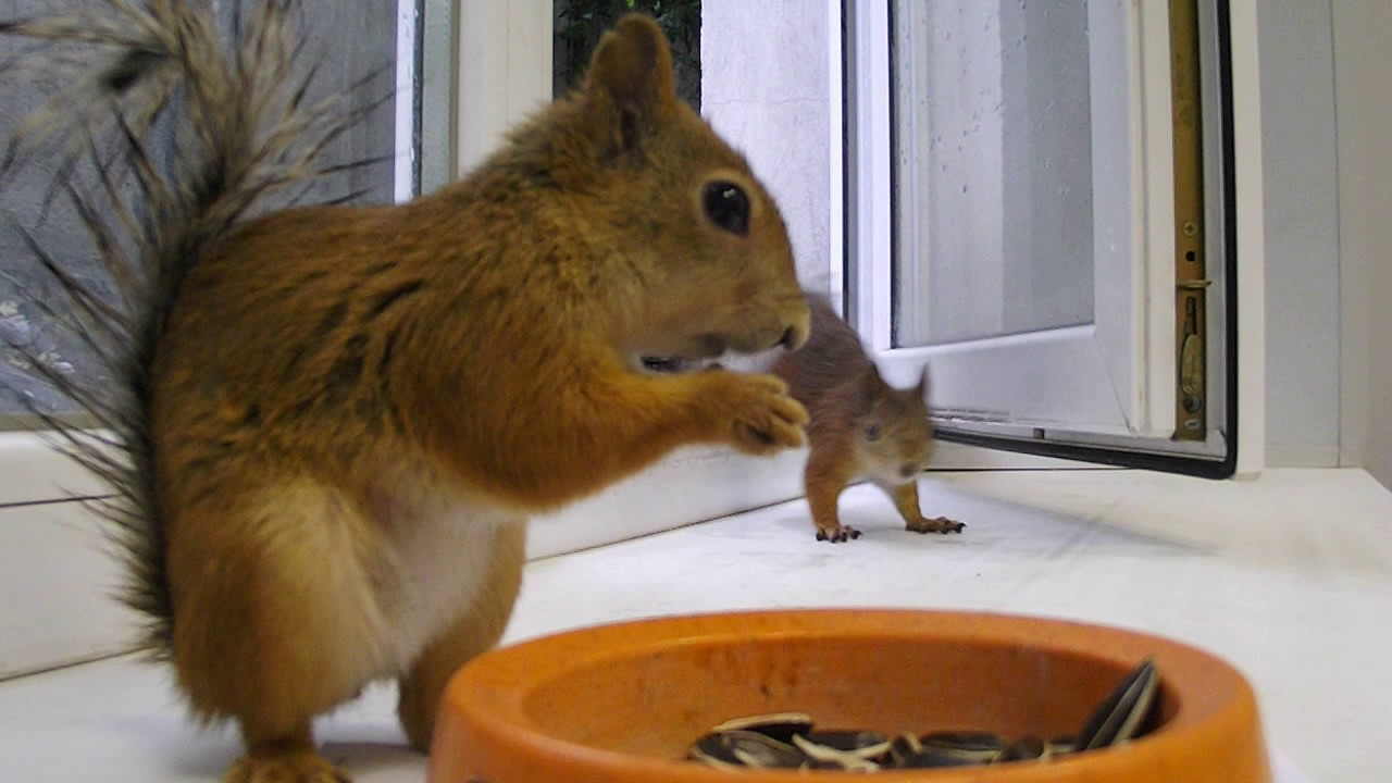 Greedy squirrel!