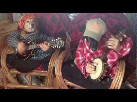 dogs play bluegrass youtube. Black Bedroom Furniture Sets. Home Design Ideas