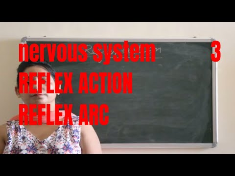 REFLEX ACTION(Reflex arc,structure and function explained)