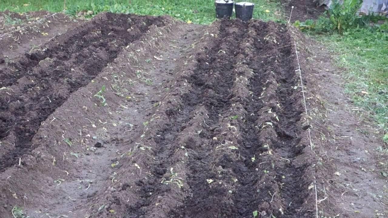 Вашему обработка почвы после чеснока художественной