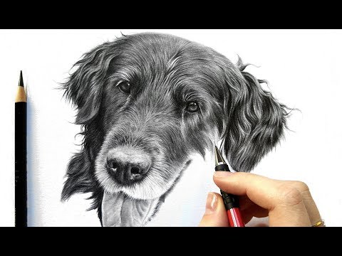 drawing-tutorial:-how-to-draw-realistic-black-fur---graphite-and-colored-pencil-|-leontine-van-vliet