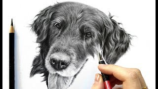 Drawing tutorial: How to draw realistic black fur - graphite and colored pencil | Leontine van vliet