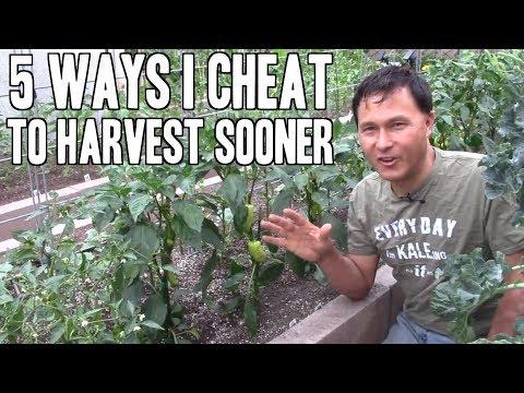 5 Ways I Cheat to Harvest Sooner from My Vegetable Garden