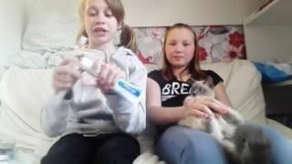 Совместное видео с Настей Соловой. Грумминг кошек (чистка зубов)