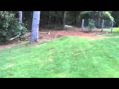 When To Dethatch Your Lawn Youtube