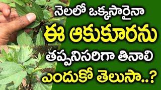 ఈ ఆకులతో ఇన్నీ ఉపయోగాలా..? I Gongura Health Benefits in Telugu I Kenaf Leaf I Everything in Telugu