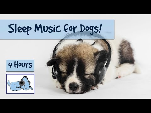 4 Hour Playlist – Sleep Music for Dogs! Watch your Dog Drift Off into a Peaceful Sleep