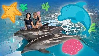 """Лазаревское. Шоу дельфинов """"Морская звезда"""". Отдых в отпуск. Обзор. Vlog"""