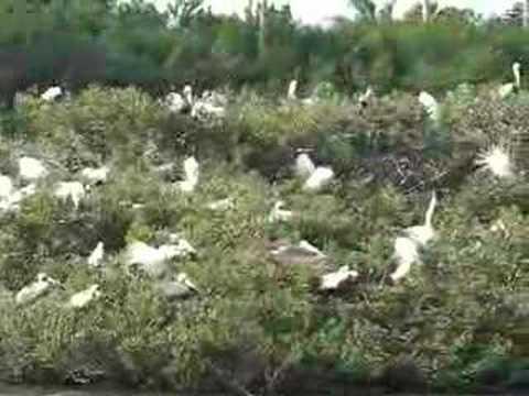 Bird condo on Florida ICW...no vacancy!