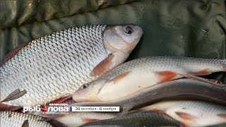 Календарь рыболова с 30 октября по 6 ноября 2017 года от телеканала 'Трофей'