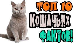 видео Интересные факты о кошках