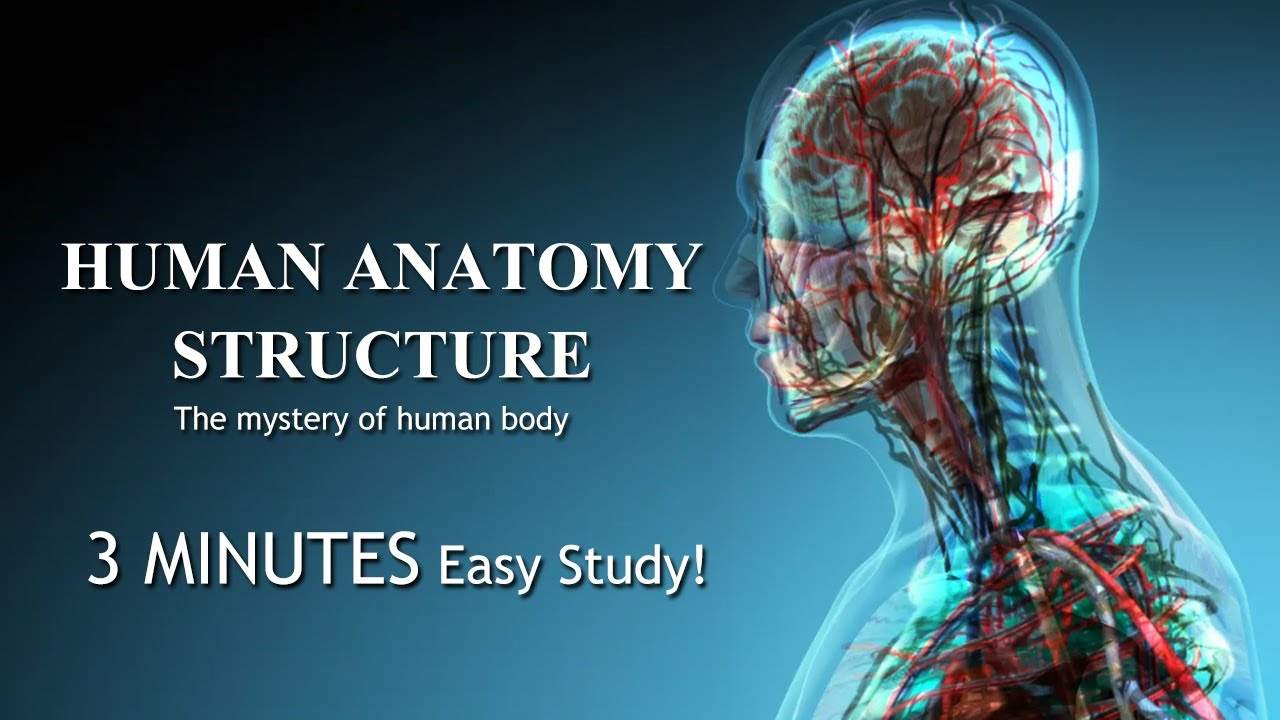 The Human Anatomy Structure 3 minutes learn Human anatomy structure 2021