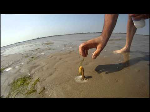How to catch a Razor Fish / Clam fragman