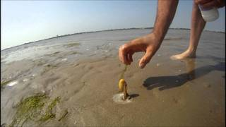 How to catch a Razor Fish / Clam