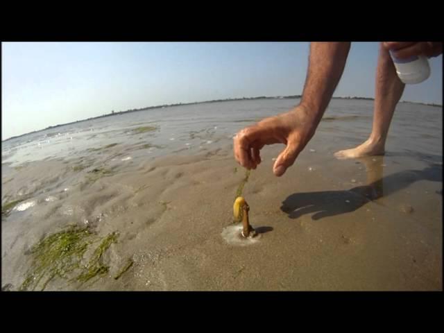 SIPAO JE SO NA OBALI MORA: Kada vidite ŠTA je iskočilo iz peska OSTAĆETE BEZ TEKSTA!