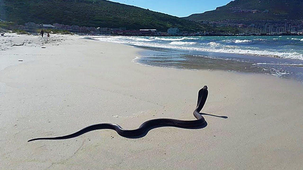 7 Самых Опасных Пляжей в Мире