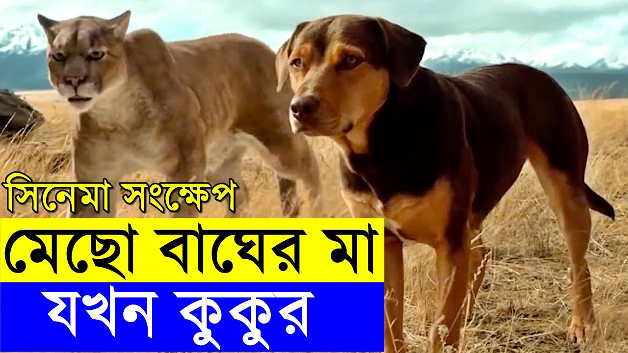 A Dog's Way Home Movie explanation In Bangla Movie review In Bangla | Random Video Channel